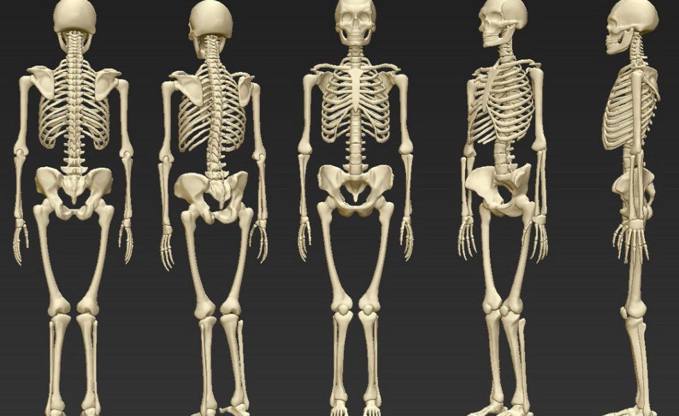 人體骨骼系統